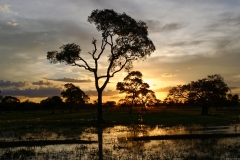 Sunset over Pantanal
